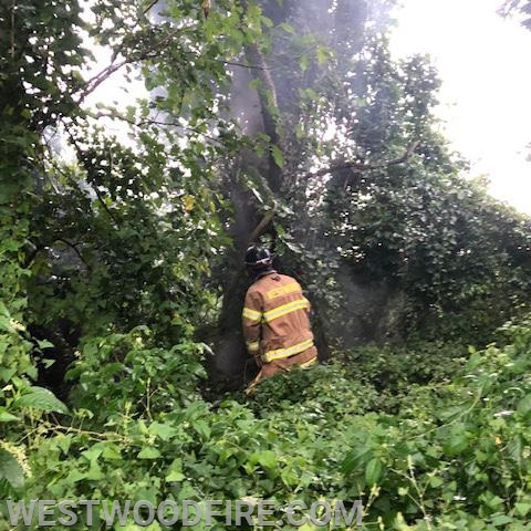 Firefighters extinguish a tree on fire in East Fallowfield.